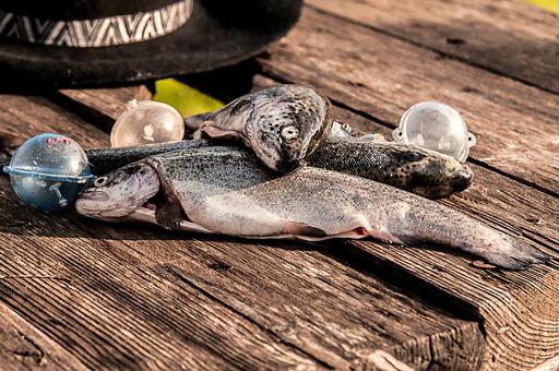 川釣り 河 川 桟橋 木 釣り フィッシング フライフィッシング 魚 釣り人 フィッシャーマン 趣味 ホビー 釣った魚 釣果 獲物 ニジマス 川魚 浮き ハット 帽子 アップ 接写 投げ釣り キャスティング