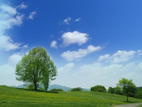 新緑 風景 初夏 青空 雲 樹木 木 丘 草原 芝 快晴 自然 屋外 ナチュラル 爽やか 背景 バックグラウンド 夏 4月 5月 6月 7月 環境 健康 公園 休暇 休日 散歩 リラックス 緑 グリーン 芝生 植物 晴れ