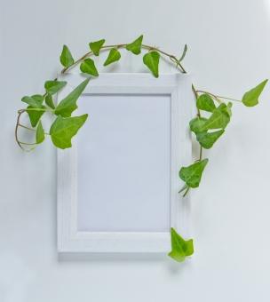 蔦 つた ツタ 緑 グリーン 植物 自然 ナチュラル 観葉植物 葉っぱ 木 フレーム 枠 木枠 小物 インテリア 背景 タイトルバック 爽やか 癒し テキストスペース キイロイトリ 白いフレーム フォトフレーム 額縁 白 ホワイト 看板 飾り枠 オブジェクト 夏 エコ 環境