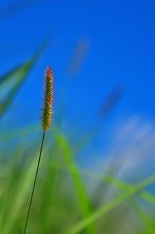 東南アジア 植物の写真