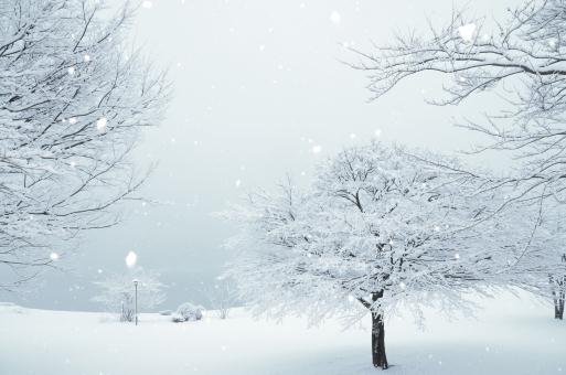 木々と雪原 白い背景の写真