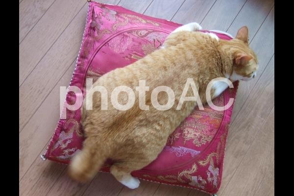 ぽっちゃり猫2の写真