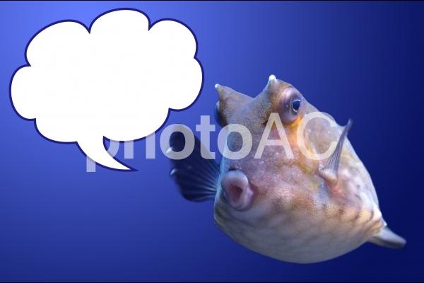 吹き出し水族館の魚の写真
