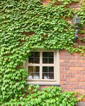 つた 蔦 窓枠 白 格子 ガラス ランプ 煉瓦 レンガ 洋館 おしゃれ 古い 歴史 緑 赤茶色 ヨーロッパ 海外 外国