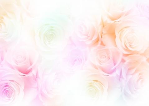 薔薇 バラ ばら 淡い ピンク オレンジ 背景 壁紙 テクスチャ エステ きれい 美しい 花 ウェディング ブーケ ブライダル 結婚 結婚式 飾り 花飾り 花模様 装飾 デコレーション 美容 母の日 ホワイトデー バレンタインデー バレンタイン 誕生日 誕生日カード ポストカード お祝い 記念日 メッセージカード メッセージ ギフト ギフトカード 招待状 模様 バックグラウンド 女性 女性的