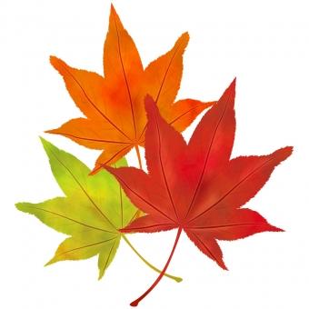 葉 植物 自然 葉っぱ 木の葉 バックグランド バックグラウンド 背景 背景素材 グラデーション 秋 秋景色 季節 フレーム枠 素材 模様 光彩 ナチュラル 飾り枠 罫 飾り罫 バックイメージ イラスト  和風 抽象的 背景デザイン 壁紙 透明感 潤い グラフィック 柔らかい テクスチャ テクスチャー 柄 デザイン 地紋 光 暖色 オレンジ 黄色 秋色 幻想的  もみじ モミジ 紅葉 葉 落ち葉 楓 文字スペース 赤 橙 空 オレンジ色 パターン 和柄 日本 かえで 山 テキストスペース カエ