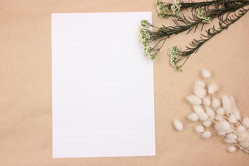 ドライフラワー 花 小物 雑貨 インテリア 植物 枯れた 乾燥 紙 白紙 手紙 便箋 ハニーテール ウサギのしっぽ 雑草 野草 草 ふわふわ 白