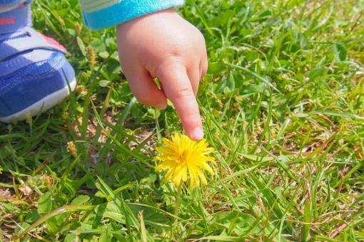 子供 指 手 タンポポ 春 見つけた 草むら 指差す 触れる 小さい 育児 子育て 晴れ 緑 しゃがむ 足元 お花 可愛い 好奇心 興味津々 発見 atohs 触る 1歳 公園