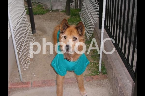 服を着た犬の写真