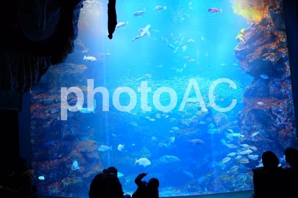 水族館と家族の写真