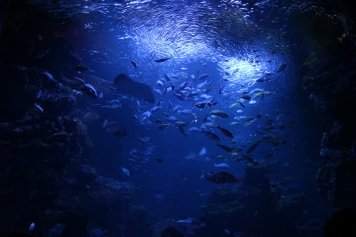 深い青 青 深海 海 海底 魚 魚群 水族館 神秘的 幻想的