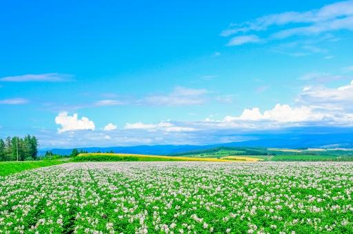 北海道!就実の丘の大地のめぐみ!の写真