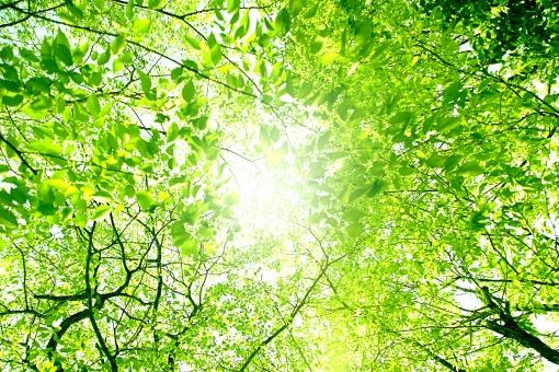 まぶしい木漏れ日の写真