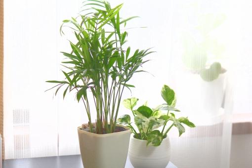 観葉植物 夏のイメージ テーブルヤシ やしの木 ポトス インテリアグリーン 室内観葉 植木 葉っぱ 緑 植物 ポトスエンジョイ
