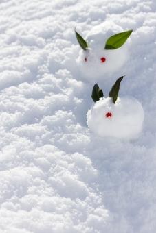ゆきうさぎ 雪兎 雪ウサギ 冬 雪景色 雪原 南天 植物 葉 実 可愛い かわいい お正月 和 雪像 雪肌