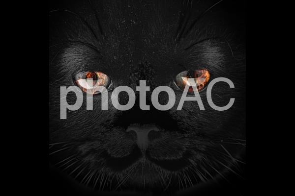 目の中に炎がある猫のゴーストの写真