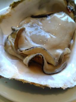 牡蠣 オイスター セレブ 金持ち リタイア リタイヤ リッチ セミリタイア セミリタイヤ 和食 イタリアン フレンチ 海鮮 魚介 おいしい 岩牡蠣 groume rich 殻つき 殻 生牡蠣 rawoyster celeb oyster huitre