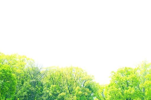 葉 緑  新緑  日本  自然 植物 屋外 壁紙 背景 背景素材 バックグラウンド 光  環境 エコ   さわやか 爽やか 初夏 森 森林 木  木々 スペース テキストスペース 空