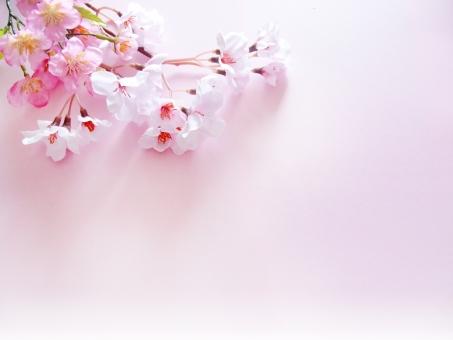 桜 背景 ピンク 春 季節 3月 4月 入学 卒業 桃の花 背景素材 造花 花 ピンクの花 桃色 祝い さくら サクラ 入園式 卒園式 フレーム