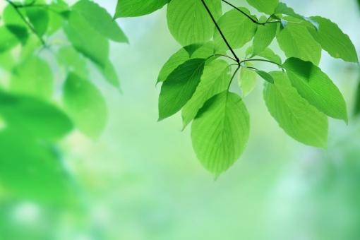若葉茂るの写真