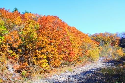 定山渓 紅葉 見ごろ 美しい きれい 綺麗 川 豊平川 美しい 見ごろ 青空 秋 秋晴れ 渓流 色鮮やか