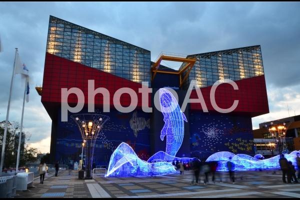 海遊館のイルミネーションの写真