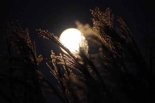 月 満月 中秋の名月 十五夜 望月 ススキ 芒 薄 イネ科 空 秋 夕方 月明かり シルエット 影 月光 月夜 夜空 お月様 お月見 風景 景色 すすき ムーンライト スカイ sky 自然 背景 moon ススキと空