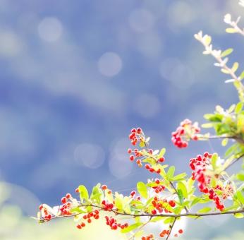 野に咲く赤い実の写真