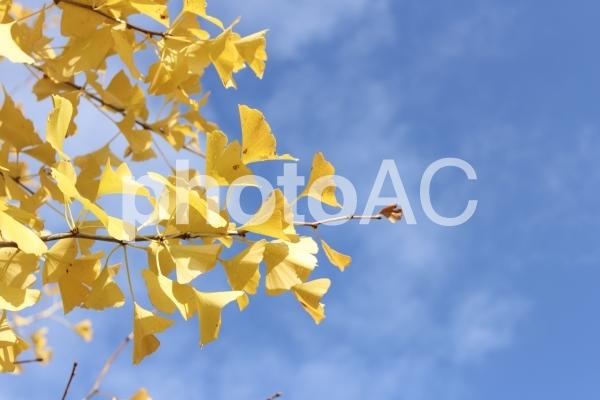 青と黄の写真