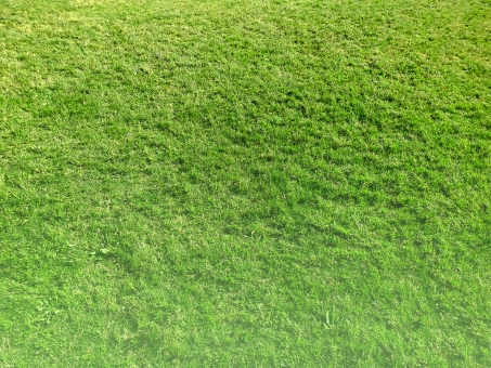 芝生 芝生草 人工芝 天然芝 自然 大自然 公園 ゴルフ ゴルフ場 アウトドア キャンプ 運動 大自然 草 植物 eco キャンプ アウトドア 草原 緑 スカイ green web素材 web背景 チラシ素材 チラシ背景 eco素材