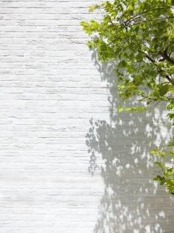 白いレンガの背景と新緑の木-縦長の写真