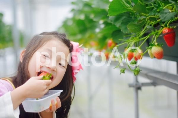 いちごと子供の写真
