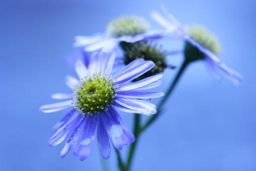植物 花 青 自然 flower plant