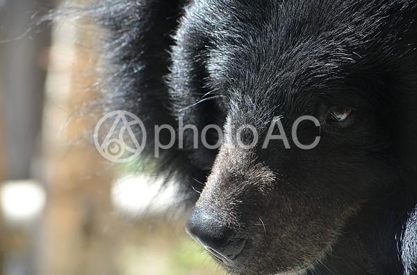 熊2の写真