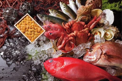 魚介の集合の写真