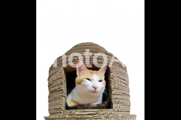 ネコハウスに入った猫の写真