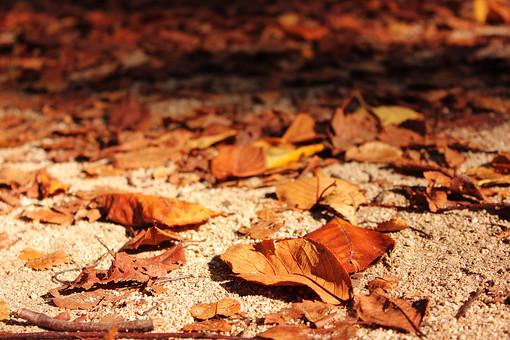 紅葉 秋 落ち葉 枯葉 枯れ葉 自然 いちょう イチョウ 銀杏 もみじ モミジ 紅葉 晴れ 色付く 葉 植物 樹木 葉っぱ 風景 土 木 影 枝