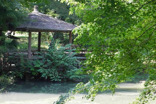 濁る 濁った 葉っぱ 葉 池 水 自然 植物 水面 樹木 植物 外 屋外 日なた 日中 晴れ 晴天 環境 癒し 森林浴 鏡池 森 森林 枝 庭園 東屋 建物