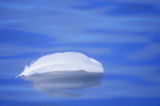 羽 羽根 はね ハネ 白い羽 水面 青 揺らぎ 波紋 白鳥 ハクチョウ はくちょう スワン ふわり ふわふわ ブルー ホワイト 風景 冬