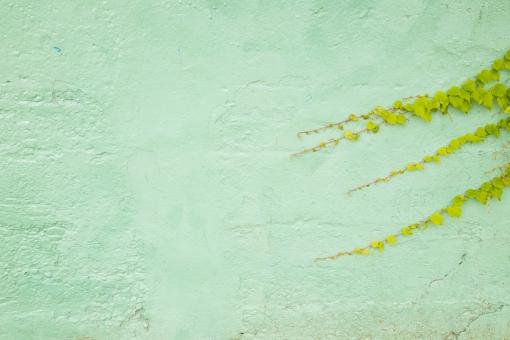 壁 カベ かべ 緑 グリーン 葉 植物 素材 テクスチャ 背景 背景素材 バックグラウンド バック