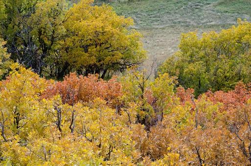 黄色く紅葉した木78