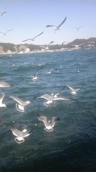 カモメ かもめ 鳥 とり どうぶつ 動物 羽 羽ばたく 海 うみ 空 そら sky 青 blue