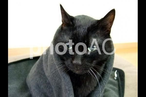 ブランケットで暖をとる黒猫3の写真