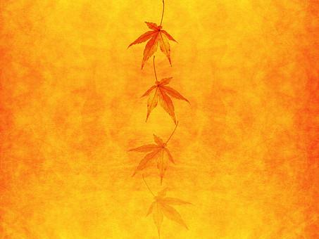 モミジ もみじ 紅葉 椛 かえで カエデ 楓 葉 植物 自然 秋 余白 背景 背景素材 バックグラウンド テキストスペース コピースペース 暖色 空間 質感 テクスチャ 赤色 赤 季節 並べる 整列 透ける 透かし 半透明 オレンジ 金 黄金 黄色 加工 写真加工