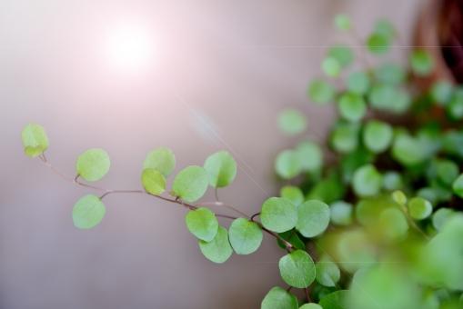 緑 ポット 植物 丸 光 逆光 反射 新緑