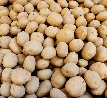 野菜 食材 ジャガイモ じゃがいも 馬鈴薯 芋類 根菜 鮮明 明るい 食べ物 健康 アップ 新鮮 きれい 綺麗 フレッシュ 実 爽やか 美味しそう 生野菜 旬 おいしそう 色鮮やか 食べ物 栄養 収穫