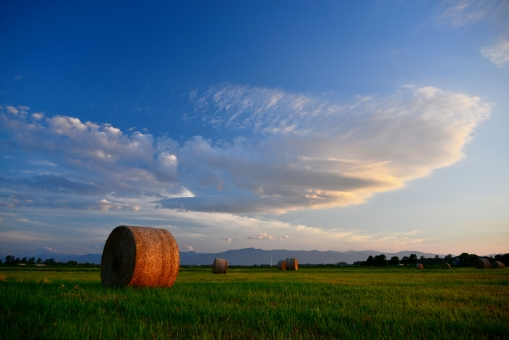 畑 秋 収穫 牧草 牧草ロール 秋の写真 畑の写真 牧草まるめたやつ 自然 風景 北海道の景色 北海道の風景 夕日 夕暮れ 夕陽 美味しそうな牧草