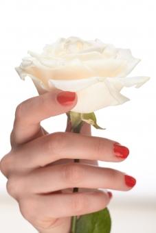 バラ 白バラ 花 フラワー 植物 花びら 花弁 がく 茎 白 ホワイト 女性 おんな 女 ウーマン レディ 肌 素肌 マニキュア 爪 ネイル 赤 手 右手 手指 指先 ハンド 持つ つかむ 触る 触れる 一輪 ハンドポーズ ポーズ ハンドパーツ パーツ 白バック 白背景