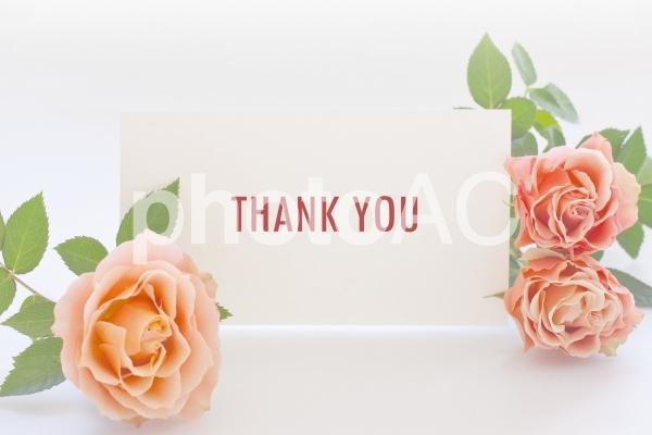 薔薇の花とサンキューカードの写真