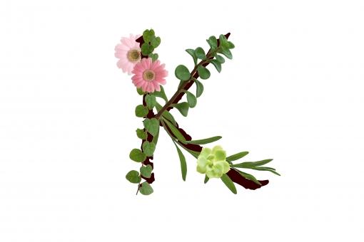 アルファベット ローマ字 英文字 文字 花 植物 ガーベラ 多肉 グリーン 葉っぱ 葉 テクスチャ 素材